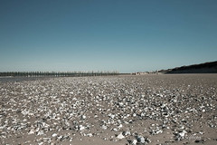 Les piquets en bois de la plage de Sangatte-5.jpg