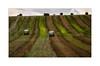IMG_5167a (keithcravenphotography) Tags: malton bales