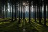 ... (*Sébastien Cors' / PicturWall / iLOVEyourHOME*) Tags: sébastien cors picturwall love your home canon 60d 10 mm 6d 1635 f4 lr lightroom hdr photomatix landscape paysage forêt forest bois