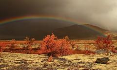Rainbow (TrondSphoto) Tags: september rainbow dørålen rondanenationalpark fall colors rain rainy mountains trondsphoto canon