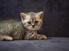 PC013020.jpg (Routine is Lethal) Tags: danang cat kitten vietnam travel animal