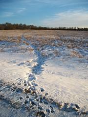 They Were Here. (geevee41) Tags: deertrails paths path trail field sky snow winter prairies