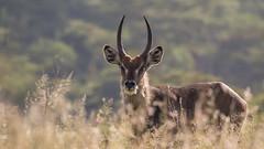 Nairobi-Nationalpark-7425 (ovg2012) Tags: kenia kenya nairobi nairobinationalpark