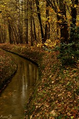 Elements (annabuni) Tags: elements terre eau forêt earth water forest automne autumn novembre november cardeilhac sony a58 anna buni bunichon nature scene