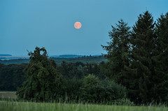 Red Moon (Panasonikon) Tags: panasonikon nikond5100 nikkor55300 vollmond mond moon baum tree wald forest eifel abendlicht landschaft landscape