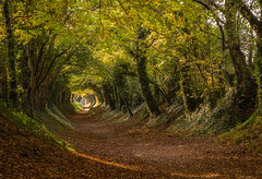 The path more followed (markhortonphotography) Tags: autumn road stanestreet markhortonphotography tunnel westsussex halnaker light avenue tree thatmacroguy colour