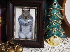 Please, Santa (MissyPenny) Tags: squirrel tree nuts christmas decor decorations