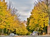 autumn in rome (ioriogiovanni10) Tags: passeggiata panasonic leica lumix novembre autunno november sky balduina street yellow giallo alberi roma