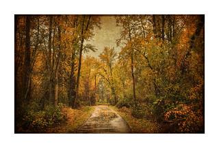 Autumn and The Contented Traveler ~ Haiku