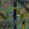 KUSA-6843 (Weinstöckle) Tags: tannenhäher rabenvogel flug vogel