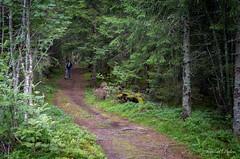 Skogsvandring (Tormod Dalen) Tags: smcpentax2835