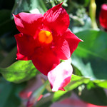 Temps de flors_0089 thumbnail