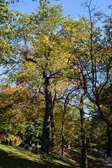 DSC_8703 A (PaBela22) Tags: montréal fleuve automne nikon d7100
