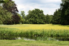 Schlosspark Charlottenburg (just.Luc) Tags: schlosspark charlottenburg park parc water eau wasser gelb geel yellow jaune arbres trees bomen bäume gras grass herbe berlin berlijn allemagne deutschland duitsland germany europa europe gaia nature natuur