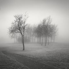 Bare Trees II (Vesa Pihanurmi) Tags: monochrome blackandwhite trees grass fog mist espoo finland nature woods path