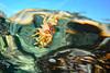 20171103-DSC_1577.jpg (d3_plus) Tags: drive fish marinesports apnea 1030mm zoomlense sea j4 underwater nikon1 景色 魚 ニコン1 skindiving watersports wpn3 風景 sky マリンスポーツ japan nikon 静岡県 空 fishingport westizu nikonwpn3 静岡 水中 ウォータープルーフケース ニコン nikkor 漁港 スキンダイビング nikon1j4 伊豆 2781mm 海 snorkeling port scenery diving 息こらえ潜水 ズーム 西伊豆 1030mmpd 素潜り shizuoka 日本 1nikkorvr1030mmf3556pdzoom waterproofcase シュノーケリング izu