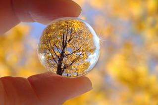 Hold onto Autumn