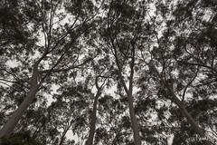 Trees in a park, Hong Kong (HK.Derek) Tags: tree park hongkong photoforsale alamy shutterstock canon eos 5d mark ii markii 1740mm ef lens eflens leaves autumn snap
