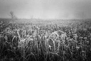 foggy hoary wetland
