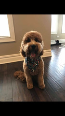 Candy's Baxter on his 1st birthday!