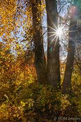 Sunburst through the Trees (HarryMiller002) Tags: sunburst trees autumn fall montana bitterroot bigsky treasurestate