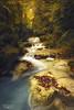 Orange Forest (Juankar DelRu) Tags: autumn orange forest bosque rio river otoño naranja agua water flow navarra urederra