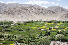View from Chemre Monastery (bag_lady) Tags: view scenic ladakh chemremonastery ladakhlandscape farming