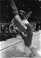 early-phoenix-mascot-028