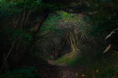 Die Lichtung (Ralf Westhues) Tags: kloster hiddensee ostsee dornbusch lichtung kreis outdoor wald planar5014zf zeiss zf2 planart1450