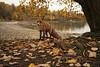 Autumn (Päivi ♪♫) Tags: norway oslo october colours leaves yellow lady fox sea fjord island beach