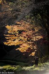 171119 Yakushiike Park-10.jpg (Bruce Batten) Tags: yakushiike trees locations machida autumncolors subjects honshu shadows parks people plants japan tokyo machidashi tōkyōto jp