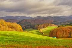 Eifellandschaft bei Honerath (clemensgilles) Tags: rheinlandpfalz wälder fall herbst autumn eifel eifellandschaft