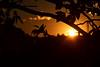 20171124_019_2 (まさちゃん) Tags: 夕暮れ時 夕陽 夕焼け空 茜色 silhouette シルエット 新幹線 葉 leaf