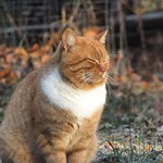 We are glad Marmalade C. Katt made an appearance this morning. We were worried about him. #cats thumbnail