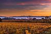 Santa Maria degli Angeli (--marcello--) Tags: santamariadegliangeli assisi sunset tramonto vineyard vine vigneto nature building landscape paesaggio