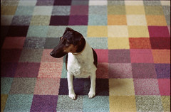 cube dog (Arpádkoos) Tags: color kodak vision2 film 35mm minolta7000 maxxum minolta dog cube kodakvision500