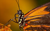 A Clockwork Orange (Kathy Macpherson Baca) Tags: animal animals insect insects earth butterfly butterflies macro close orange planet world nature invertebrates fly wings flying delicate flower natural wildlife pollinators