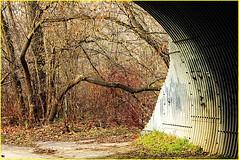 171202 Pomona Mills Park (16) (Aben on the Move) Tags: pomonamillspark toronto thornhill ontario canada park nature