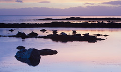 Seals basking at sunset (TimHarris) Tags: seals sunset arran