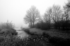 In my dreams... (gambajo) Tags: fog landscape nature river creek trees blackandwhite blackwhite shadows weilerswist erft dreamy