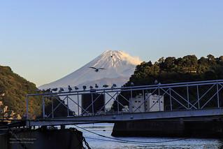 海味富士。內浦三津,  Japan  _MG_4595