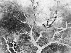 Winter Texturized 2 (Rossdxvx) Tags: blackandwhite winter woods dark tree trees noir nature naturenoir textured texture textures texturized michigan 2017 overlay overexposed outdoor outdoors otherworldly abstract art bleak silhouette shadows experimental experimentation