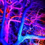 Blickling Hall Christmas Lights 2017 thumbnail