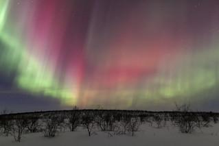 Arctic Spectacle
