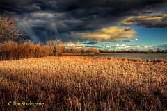 THE COMING STORM (MERLIN08, 3MViews) Tags: usa colorado lakewood kendricklake water cattails stormclouds outdoors