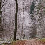 Winterlich   /   wintry thumbnail