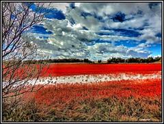 Colores lagunares en el humedal manchego. (Jose Roldan Garcia) Tags: limonium humedal naturaleza nubes natural colores cielo luz libre laguna ecosistema complejo alcázar mancha plantas