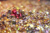 My Christmas earring (alutik) Tags: macromondays buttonsandbows macro closeup colors colorful beauty beautiful bright earring christmasmood holidayspirit dof deapthoffield december bokeh sparkle glitter pretty light beads canon 70d efs1855mmf3556iii