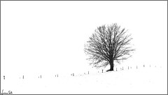 vuê (Luciano Silei - sky7) Tags: blackwhite bianconero bw highkey tree snow lucianosilei lumix panasonic dmcfz200 carnia raveo pani elitegalleryaoi bestcapturesaoi aoi