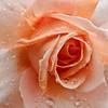 Pink (dicktay2000) Tags: ©richardtaylor australia g11 20111211img3926